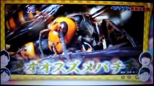 オオスズメバチ写真1