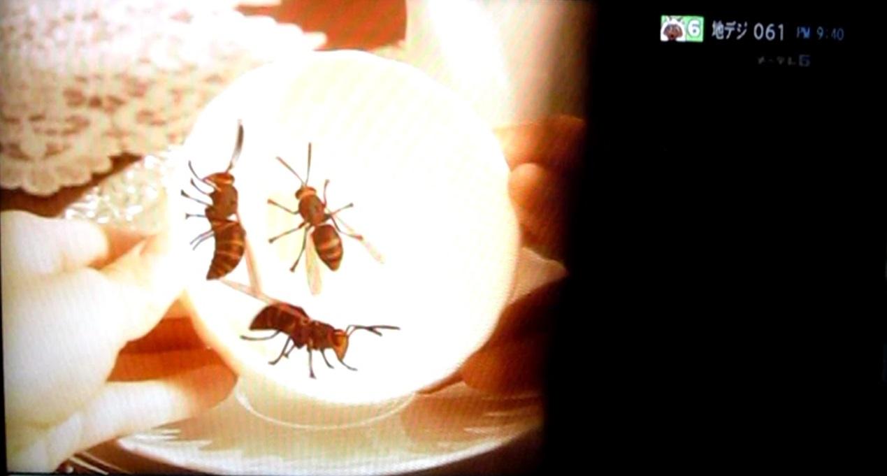 相棒のスズメバチ写真