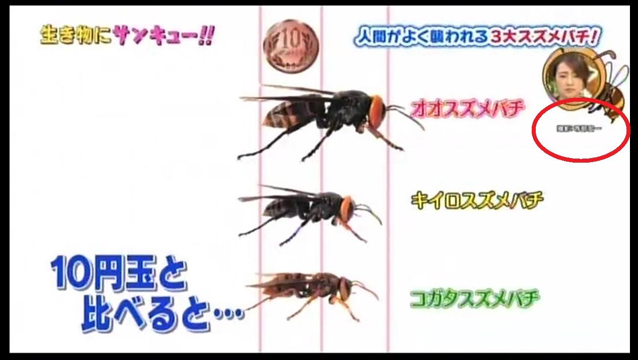オオスズメバチ、コガタスズメバチ、キイロスズメバチ
