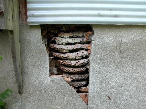 スズメバチの画像 p1_22